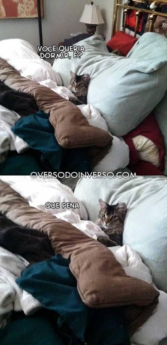 gato-cama
