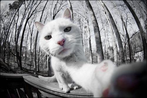 gato-06