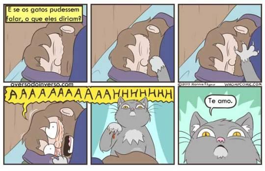 gatos-falando
